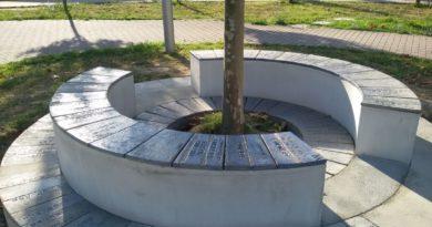panchina-boschi-presso-don-milani_1