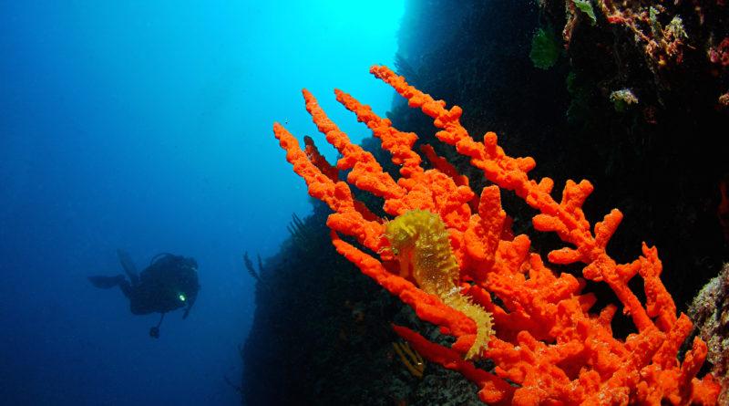 fotografia subacquea