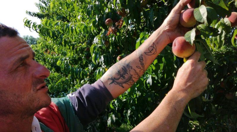 Romano Gaddoni agricoltore