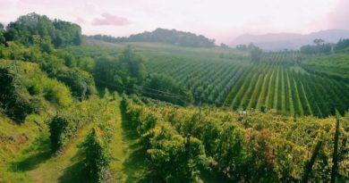agricoltura collina natura