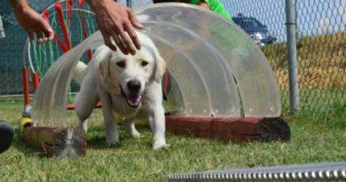 cane addestramento